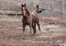 Free Horse Covered In Sand Stock Image - 9375281