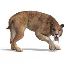 Free Big Cat Sabbertooth Royalty Free Stock Images - 9376709