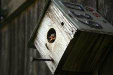 Free Bird In Recycled Bird House Stock Photo - 9377020