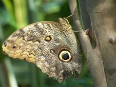 Free Camoflage Butterfly Royalty Free Stock Image - 9377716
