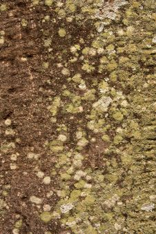 Free Lichen On Suface Of Stone Stock Photo - 9377870