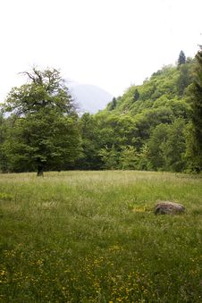 Free Meadow And Forest Stock Photography - 9377922