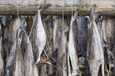 Free Several Fish Hung To Dry Royalty Free Stock Images - 9378509