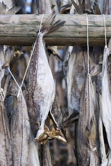 Free Several Fish Hung To Dry Royalty Free Stock Image - 9378526