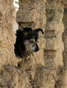 Free Dog Royalty Free Stock Photography - 9378767