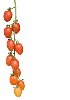 Free Cluster Of Tomatoes Royalty Free Stock Photography - 9378787