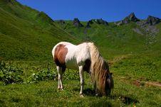 Free Horse Royalty Free Stock Image - 9378936
