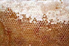 Free Tasty Honeycomb Royalty Free Stock Photo - 9379395