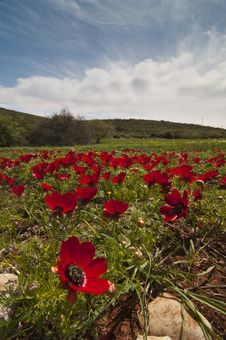 Free Poppies With Blue Sky Stock Photos - 9379693
