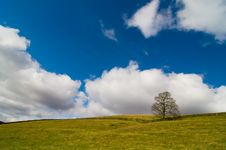 Free Field, Tree And Sky Royalty Free Stock Photo - 9379825