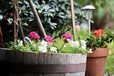 Free Flowers In Old Barrels And Pots Royalty Free Stock Image - 93731876