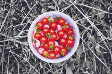 Free Bowl Of Red Tomatoes Stock Photos - 93731943