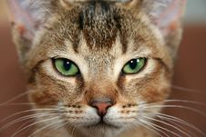 Free House Cat Portrait Royalty Free Stock Photography - 93732097