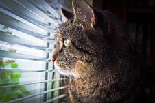 Free Portrait Of Cat By Window Stock Photography - 93732102