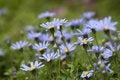 Free Daisy Stock Photos - 9383543