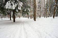 Free Ski-run In Winter Forest Stock Image - 9380341