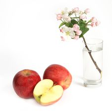 Free Apple With Apple Flowers Royalty Free Stock Photos - 9380978