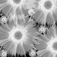 Free Flowers Stock Photos - 9382673