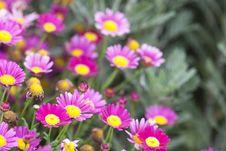 Free Daisy Stock Photography - 9383482