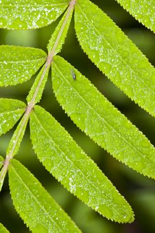 Free Leaf With Dew Royalty Free Stock Image - 9383626