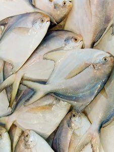 Free Fish Royalty Free Stock Photos - 9383928