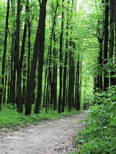 Free Forest Path Royalty Free Stock Image - 9384406