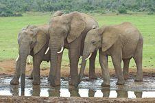 Free Three Elephants Stock Photography - 9384932