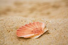 Free Orange Cockleshell On Sand Stock Photos - 9385403
