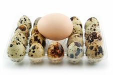 Group Of Raw Quail Eggs In Box Isolated On White Stock Photos