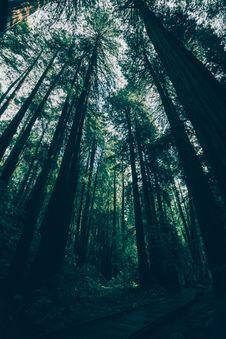 Free Tall Trees Stock Photo - 93866950