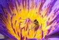 Free Flower Stock Image - 9395631