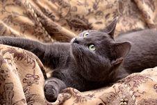 Free Lying Grey Cat Royalty Free Stock Photos - 9390528