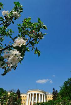 Free Blossom Royalty Free Stock Photo - 9390985