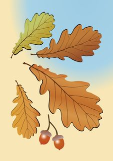 Free Autumn Oak Leaves Stock Images - 9391544