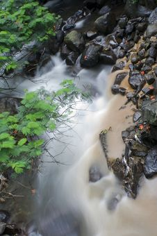 Free River In The Forest Stock Photography - 9392932