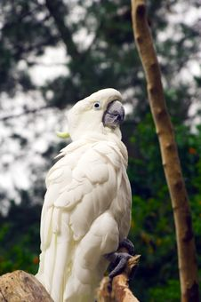 Free White Parrot Stock Images - 9393114