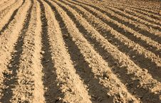 Free Ploughed Agricultural Field Stock Photography - 9393182