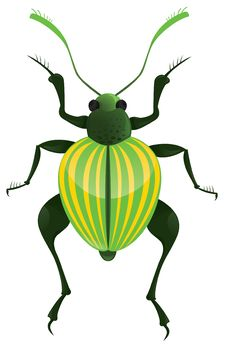 Free Insects Stock Photography - 9393572