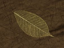 Free Decorative Skeleton Leaf Royalty Free Stock Image - 9395186