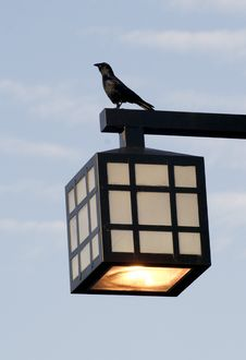 Free Black Bird On Top Of Street Lamp Stock Photo - 9395620
