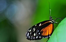 Free Butterfly Perched On A Leaf Stock Photo - 9396560