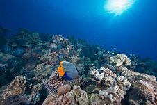 Free Ocean, Sun And Fish Royalty Free Stock Photo - 9396905