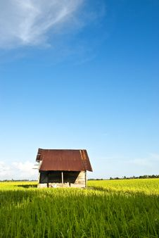 Free Asia Paddy Field Series 7 Stock Image - 9397851