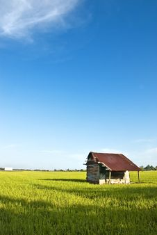 Free Asia Paddy Field Series 7 Stock Photos - 9397873