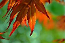 Free Maples Edge Royalty Free Stock Photos - 93945518