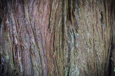 Free Tree Bark Texture Royalty Free Stock Photo - 93945995