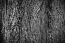 Free Tree Bark Texture Royalty Free Stock Images - 93946029