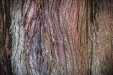 Free Tree Bark Texture Royalty Free Stock Photography - 93946197