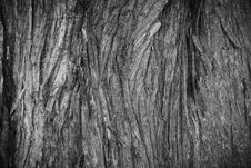 Free Tree Bark Texture Royalty Free Stock Images - 93946709