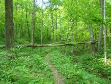 Free Oldtown Creek Preserve Royalty Free Stock Photo - 93948185
